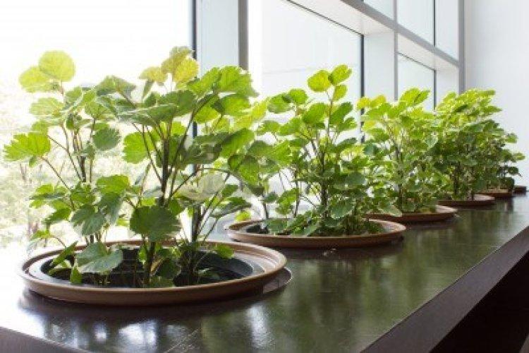 fascinating-modern-plants-indoor-modern-plants-indoor-modern-large-indoor-plants-mid-century-modern-indoor